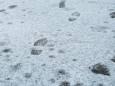 У Поволжі випав жовтий сніг