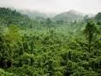 За 17 лет на планете уничтожена треть тропических лесов