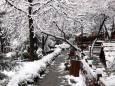 На Туреччину обрушився несподіваний березневий снігопад