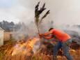 ВИДЕО. Мощный лесной пожар возле жилых районов в Мексике