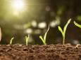 Kalendarz księżycowy ogrodnika i sadownika na kwiecień 2021 roku
