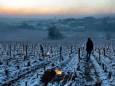 Французькі винороби підрахували ціну «найсильніших морозів за десятиліття»