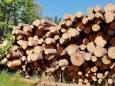 Китай і ЄС - головні знищувачі лісів