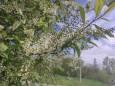 Погода в Україні на вівторок, 4 травня