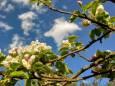 Погода в Україні на середу, 5 травня