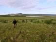На Чукотці побиті температурні рекорди