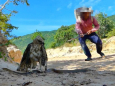 На YouTube зростає кількість постановочних роликів про «порятунок» тварин