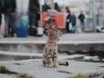 В Австралії кішок заборонять випускати на вулицю