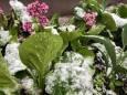Новий рік в липні: в Росії місцями випав сніг