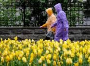 Синоптик объяснила, почему начало лета было в Украине холодным