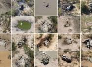 В Ботсване зафиксировано массовое вымирание слонов