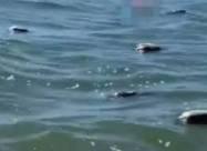 На українському курорті виявили мертвих качок