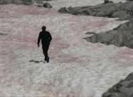 В Альпах лед приобрел розовый цвет
