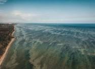 «Цветение» Черного моря видно со спутника