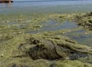 В Одессе с пляжа вывезли сотни тонн водорослей