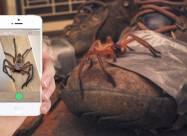 В Австралии создали приложение для распознавания ядовитых животных