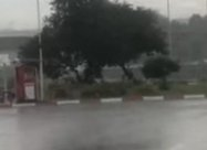 На запорожской трассе непогода валит деревья
