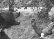 Медведь, который прошел войну