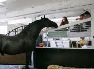 В Великобритании открылся уникальный отель с лошадьми