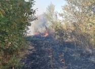 В Сумской области загорелась степь возле дачных домов
