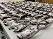 Масове вимирання птахів на заході США пов'язано з «вибухом холоду»