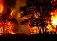 ВИДЕО. Жуткие кадры лесных пожаров, снятые на камеру