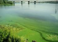 Цвітіння води в Дніпрі викликано надмірною кількістю фосфатів