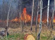Пожежі та браконьєри в Чорнобилі: як вони впливають на тварин?