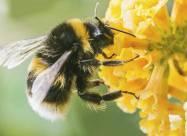 Рівень радіації в Чорнобилі шкодить бджолам
