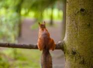 Лісове метеобюро: як птахи і звірі передбачають погоду