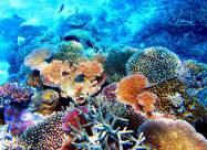 Австралийские ученые открыли новый коралловый риф высотой 500 метров