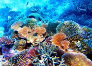 Австралійські вчені відкрили новий кораловий риф висотою 500 метрів