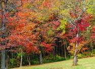Погодні прикмети на 29 жовтня