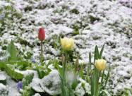 «Безсиле сонце» і «погода для качок»: онлайн-бібліотека Європеана опублікувала добірку «погодних» виразів на різних мовах