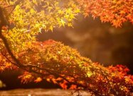 Погодні прикмети на 31 жовтня