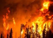 Внутри лесного пожара. Жуткие видео очевидцев, попавших в огненную ловушку