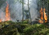 В Алжире после лесных пожаров сажают деревья