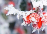 Лунный календарь огородника и садовода на декабрь 2020 года