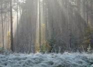 Погодні прикмети на 4 грудня