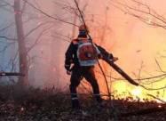 Перепраздновали. В России произошел лесной пожар из-за фейерверков