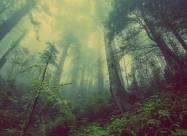 Более 300 млн гривен убытков понесли леса и растительный мир в течение 2020