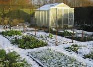 Kalendarz księżycowy ogrodnika i sadownika na styczeń 2021 roku