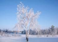 Погодные приметы на 23 января