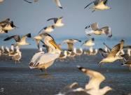 Популяция перелетных птиц на севере Ирана увеличилась на 30%