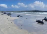 Біля узбережжя Базаруто загинуло 111 дельфінів