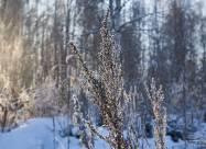 Погодні прикмети на 25 лютого