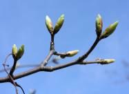 Лунный календарь огородника и садовода на март 2021 года
