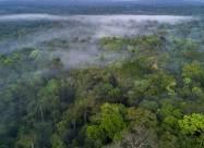 Нелегальную продажу лесов Амазонки обнаружили в Facebook