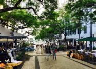 Португальське місто чіпує 8 тисяч дерев