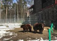Вблизи Львова вновь открыл свои двери для туристов медвежий приют «Домажир»